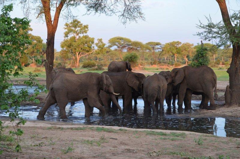 image085 elefants