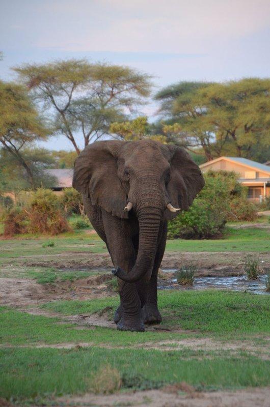 image086 elefants