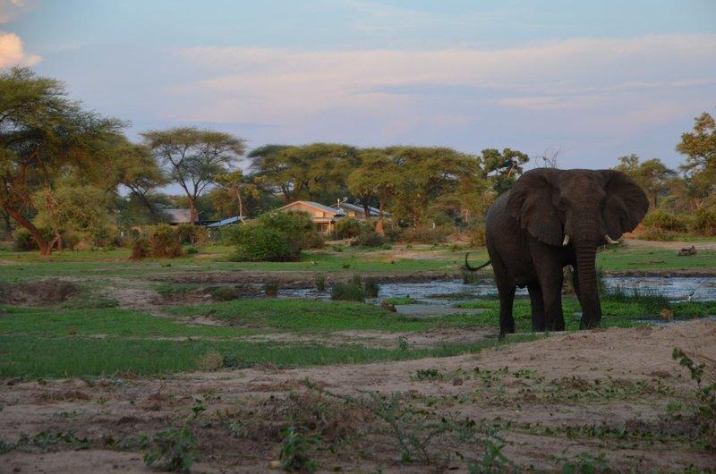 image087 elefants