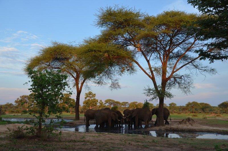 image088 elefants