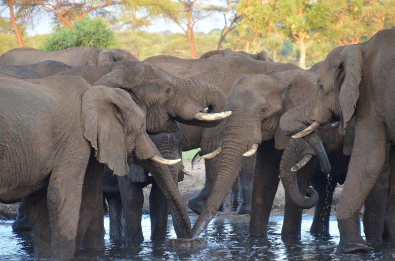 image089 elefants