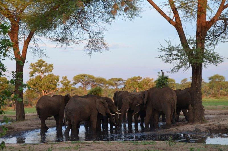 image090 elefants