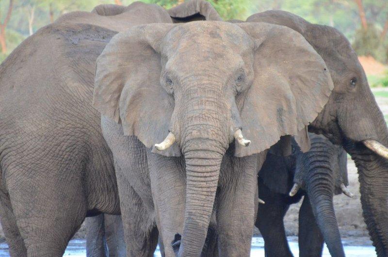 image092 elefants