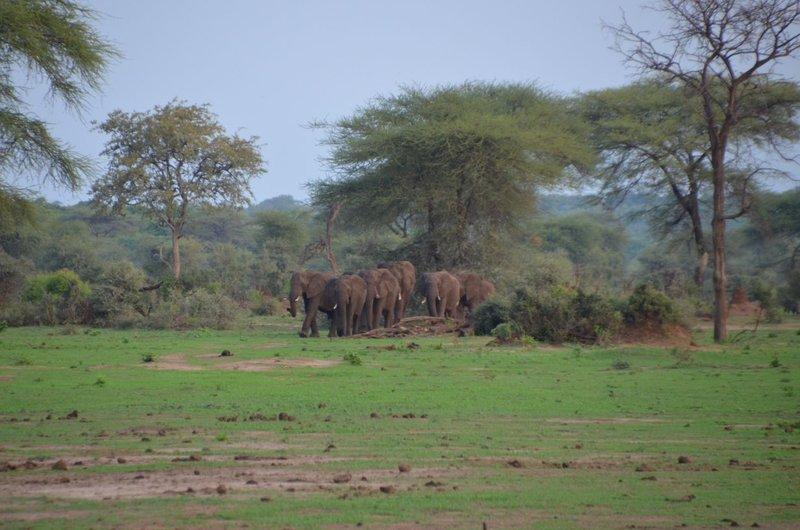 image095 elefants