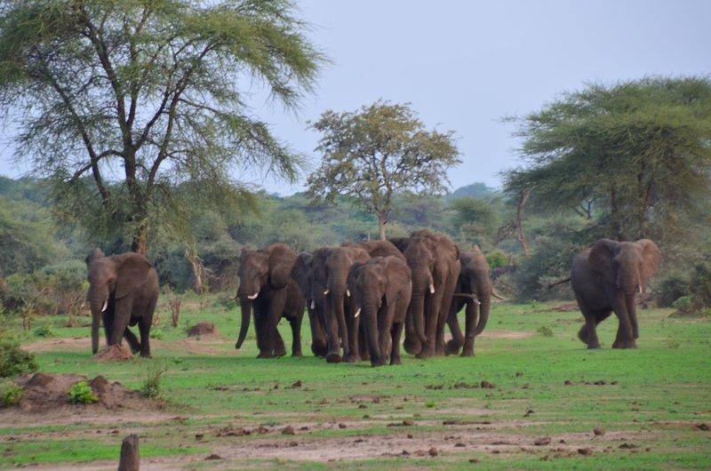 image096 elefants