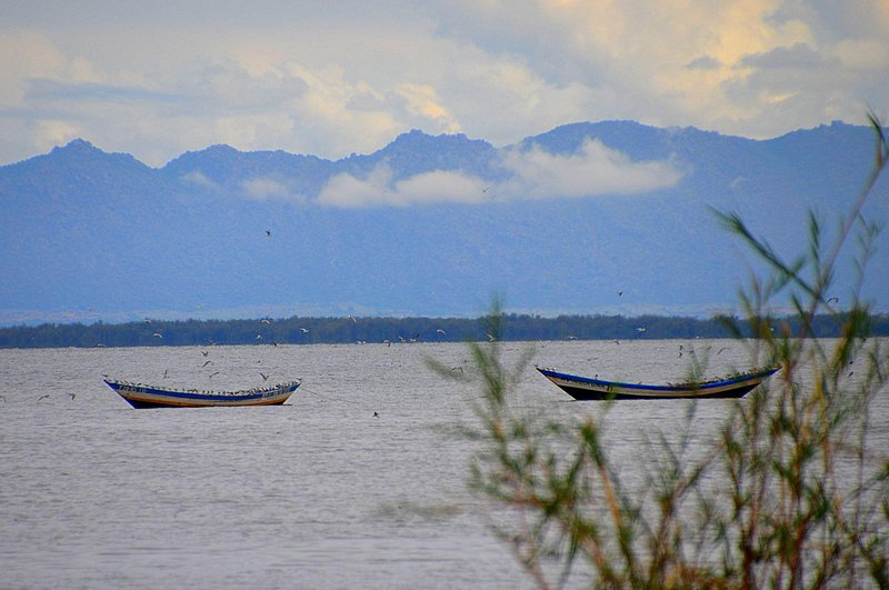 Victoria Lake birds on boat