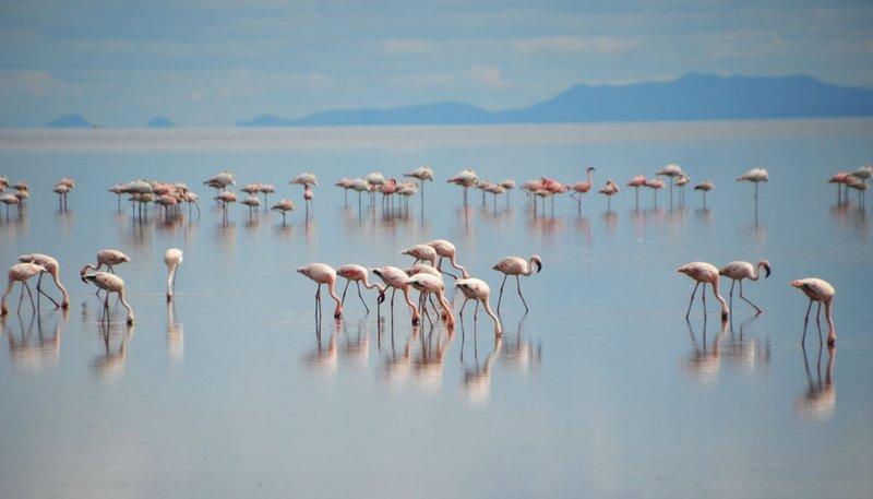 Flamingos on Natron Lake