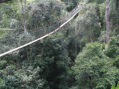 jungle1.jpg