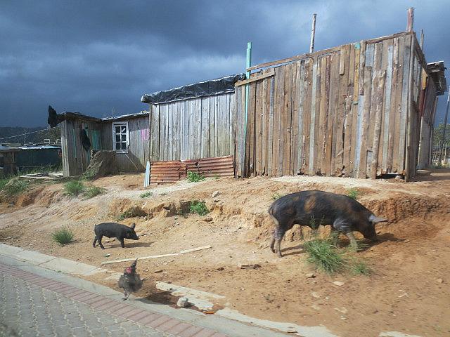 Township Livestock ...