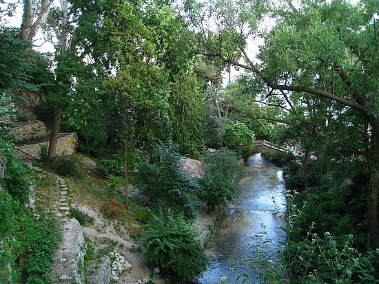 Some More Botanical Garden