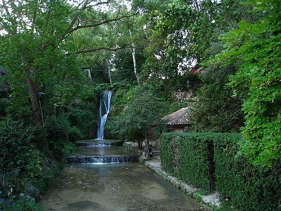 Even More Botanical Garden