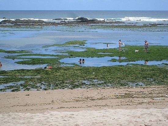 Nasty Tidal Pools - Why Would You Sit In That?!?!?