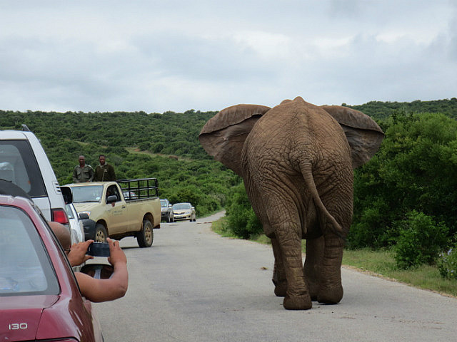South African Traffic Jam