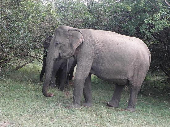 Mr. Elephant (or Mrs.)