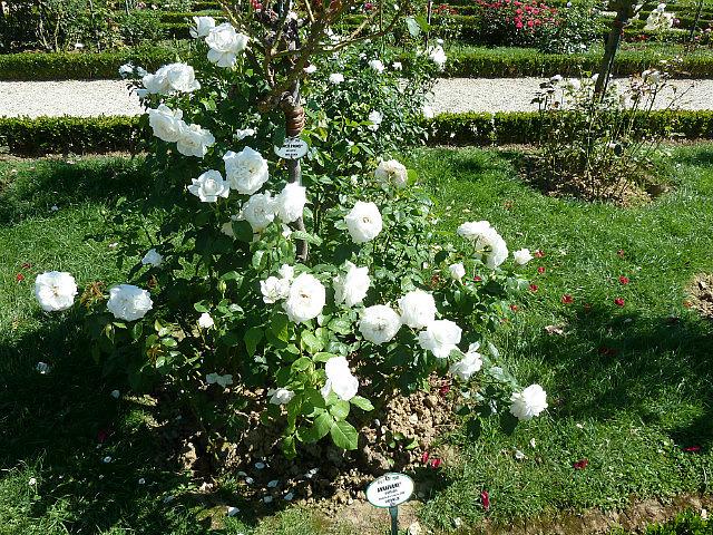 Jardins des bagatelles-5