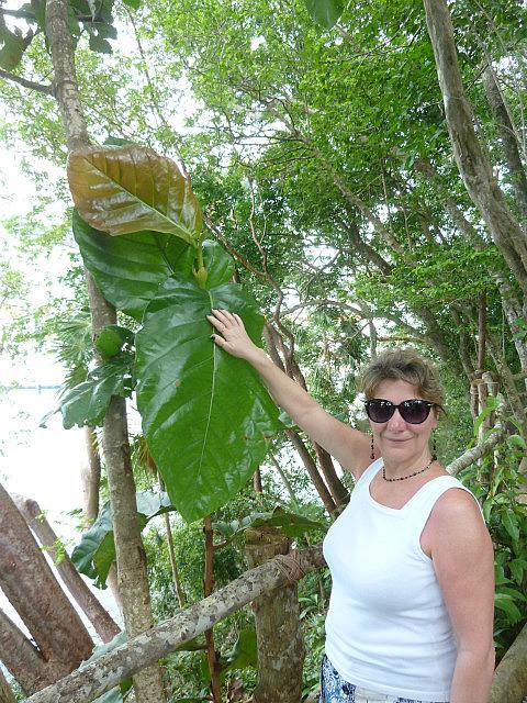 De retour à la plage, et la végétation