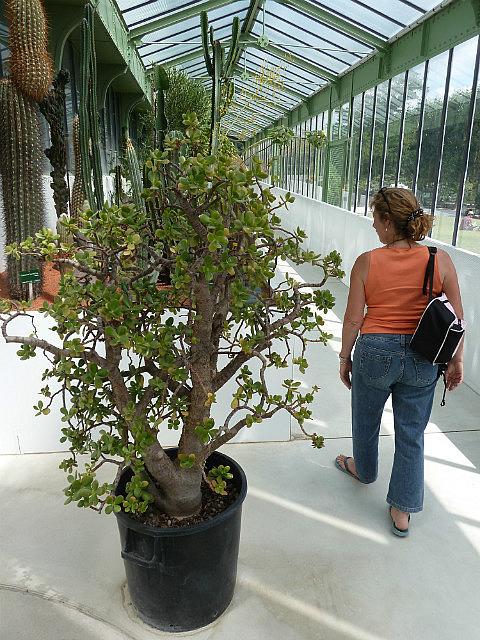 Jardins des plantes-6