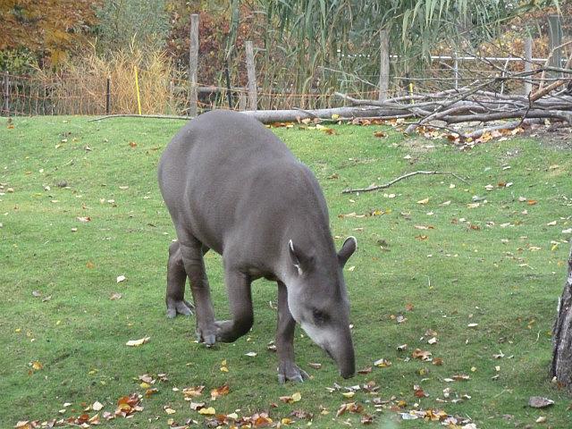 Schlöbrunn , zoo-3