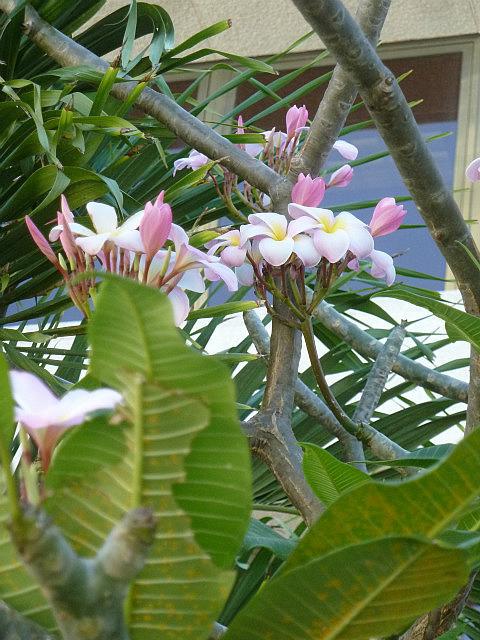 Végétations luxuriantes