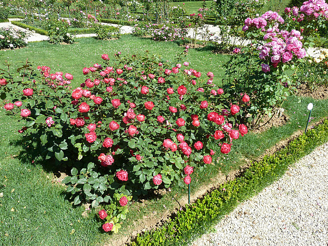 Jardins des bagatelles-6
