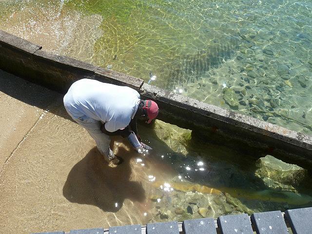 Au retour de la pêche