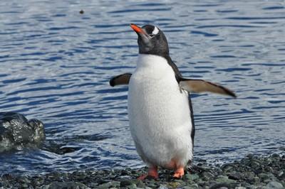 PenguinAshore.JPG
