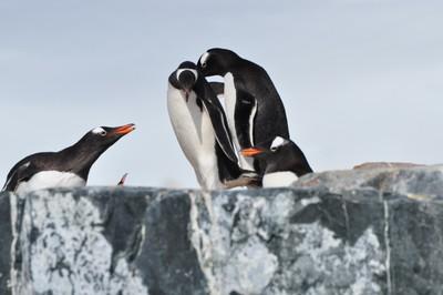 PenguinsTalking.JPG