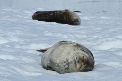 SealsDozing.JPG