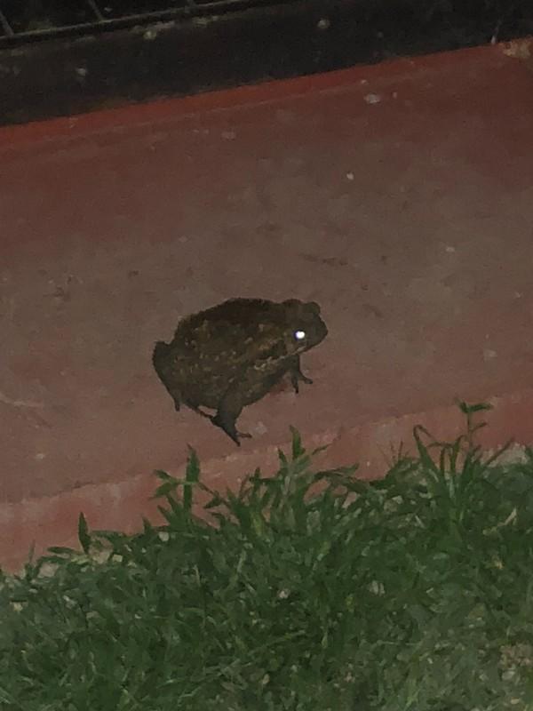 Guard Frog