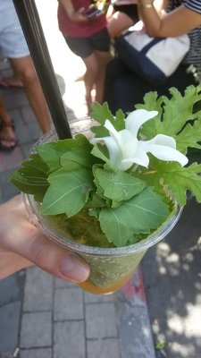 Crazy plant drink