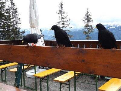 birds who want to steal our food