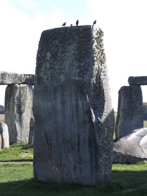 Birds on Stonehenge