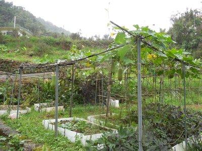 Farm area