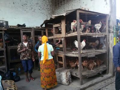 chickens in market