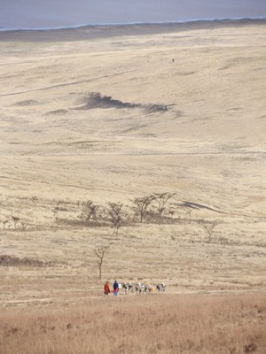 masai with herds
