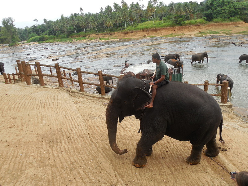 Riding an elephant back