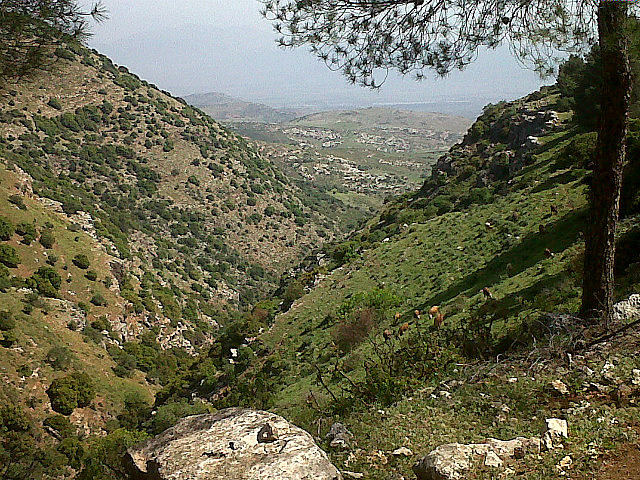 Nevoraya view