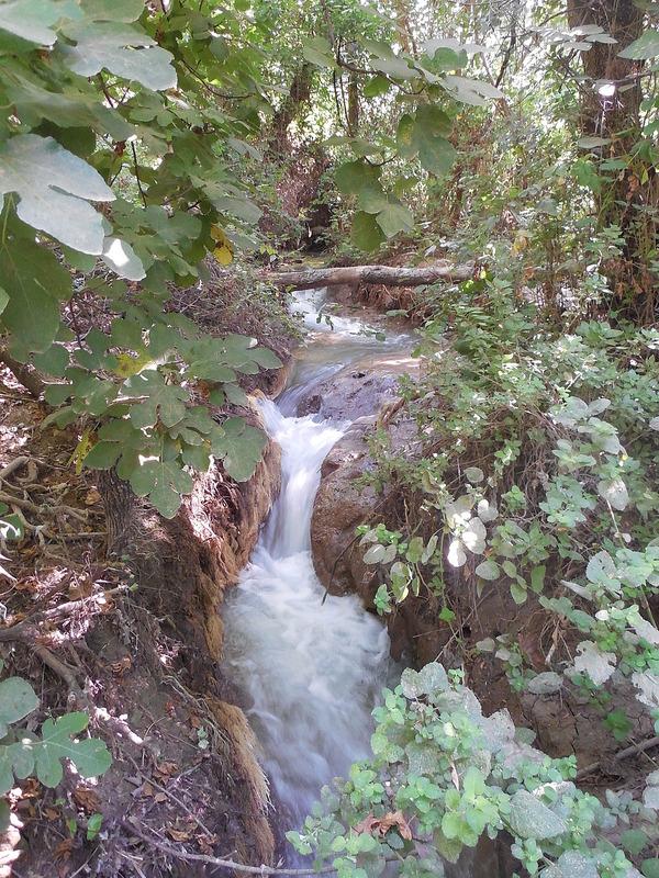 Kiryat Shmona Creek