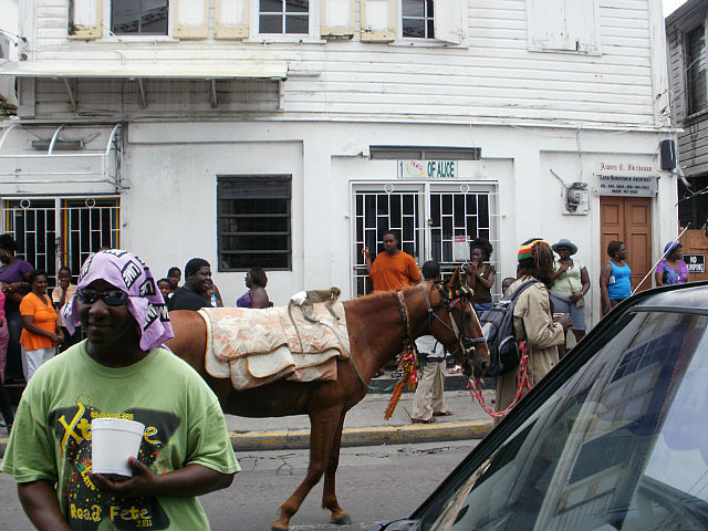 Rasta man with horse marching