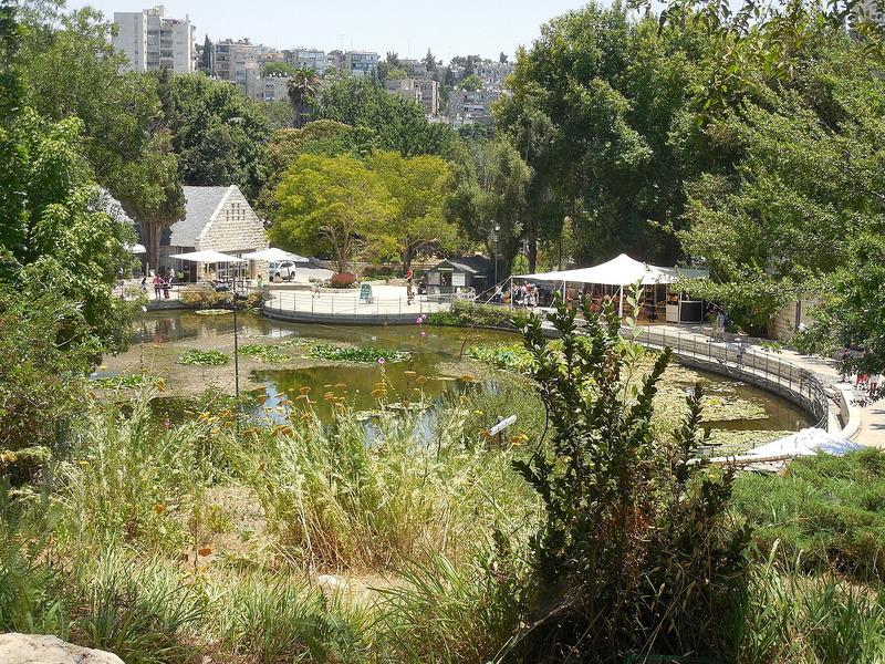 Pond at Jerusalem Botanical Gardens