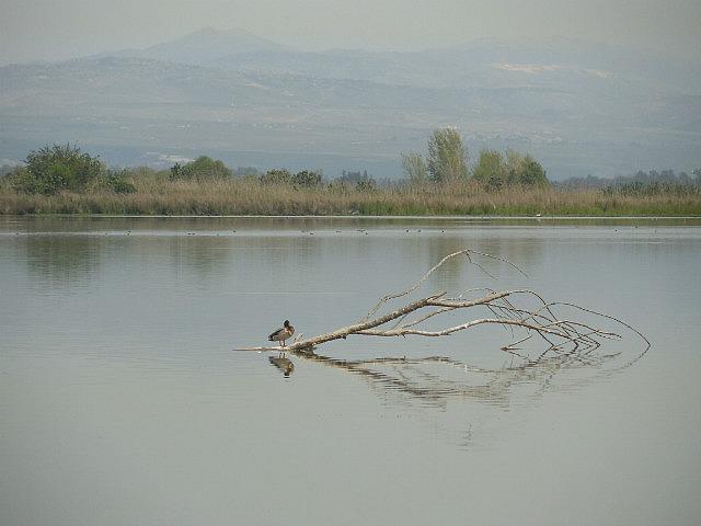 Agmon Lake