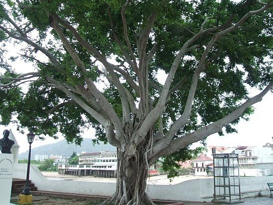 A park in Casco Viejo