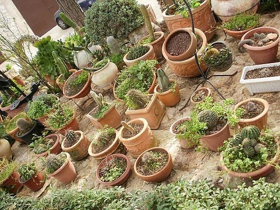 Cacti at monastery