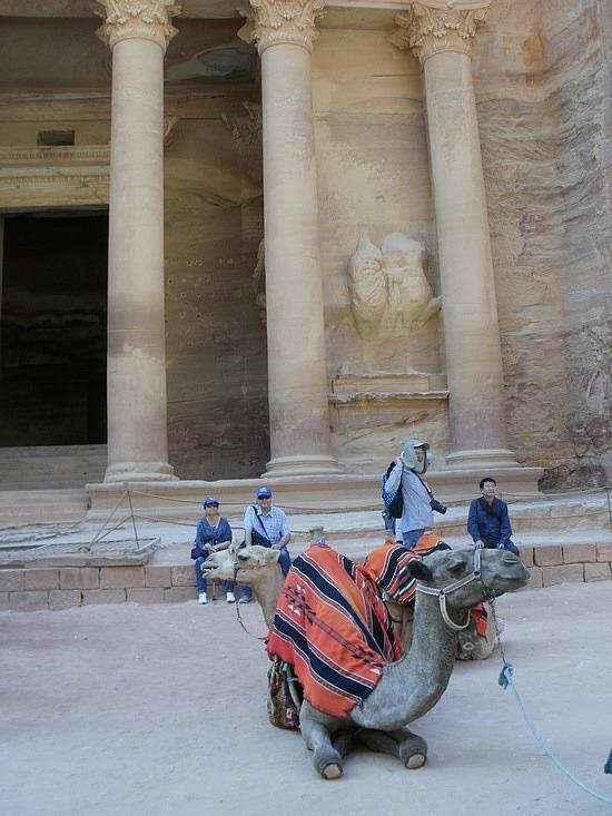 Camel at treasury