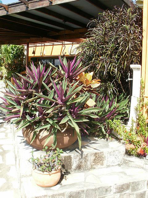 Palm Court Gardens