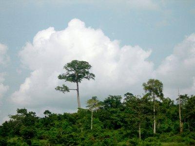 GH3_African_Trees1.jpg