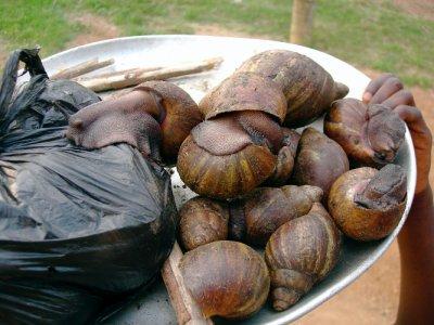 GH5_SnailS..Closeup.jpg