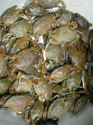 GH7_Makola_Crabs.jpg