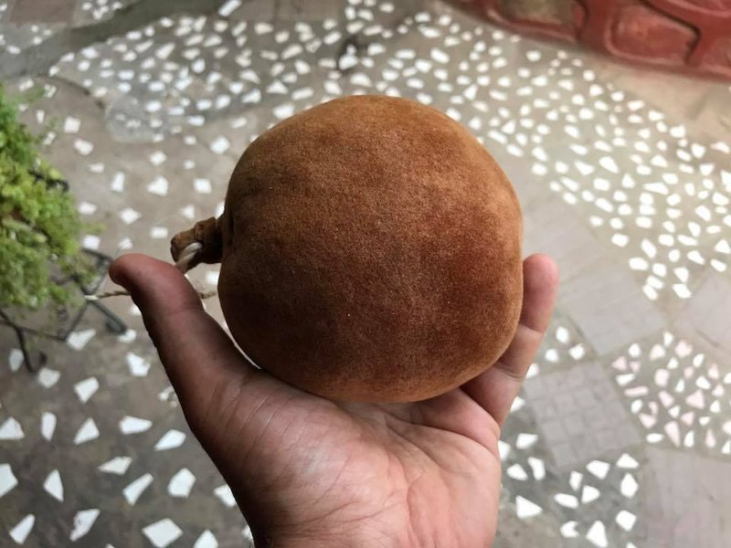 large_Baobab_fruit.jpg