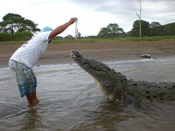 Krokodille safari i costa rica